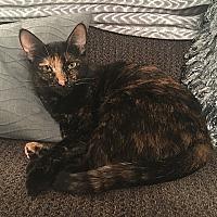 Adopt A Pet :: Sophie - Tampa, FL