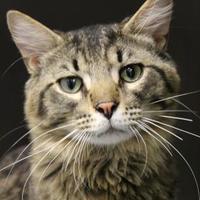 Adopt A Pet :: Rudolph - Lafayette, IN