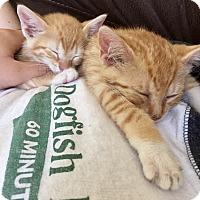 Adopt A Pet :: Mimosa - Jersey City, NJ
