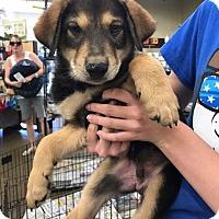 Adopt A Pet :: Clyde - Fresno, CA