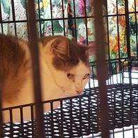 Adopt A Pet :: Lucy - West Monroe, LA