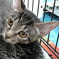 Adopt A Pet :: Little Archie - Highland Park, NJ
