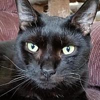 Adopt A Pet :: Sybil - Philadelphia, PA