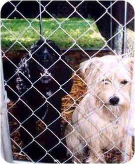 Cocker Spaniel Dog for adoption in Huron, Ohio - Ebony