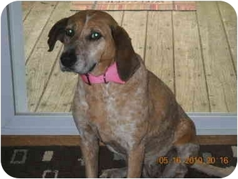 Hound (Unknown Type) Mix Dog for adoption in Reisterstown, Maryland - Jenny