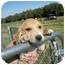 Photo 1 - Hound (Unknown Type) Mix Puppy for adoption in Lonedell, Missouri - Brinkley 8