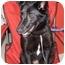 Photo 2 - Border Collie/Shepherd (Unknown Type) Mix Dog for adoption in Overland Park, Kansas - Shadow