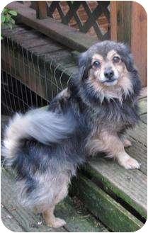 Chihuahua Mix Dog for adoption in Salem, Oregon - Sparkey
