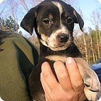 Adopt A Pet :: Argus - Glastonbury, CT