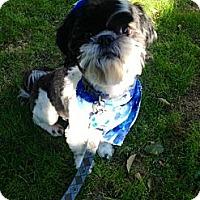Adopt A Pet :: Chico - Whittier, CA