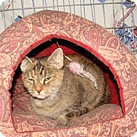 Adopt A Pet :: Chloe - Spotsylvania, VA