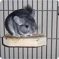 Adopt A Pet :: Animal - Virginia Beach, VA