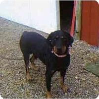 Adopt A Pet :: Mandy - Evansville, IN