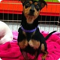 Adopt A Pet :: Chin Chin - Encinitas, CA