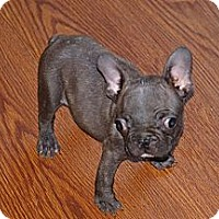 Adopt A Pet :: TG - PENDING - Toronto/Etobicoke/GTA, ON