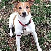 Adopt A Pet :: Jack - TRAINED! - Oak Creek, WI
