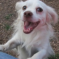 Terrier (Unknown Type, Medium) Dog for adoption in Elizabethtown, Pennsylvania - Whitey Leach