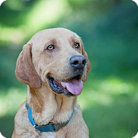 Adopt A Pet :: Bordeux - Lewisville, IN