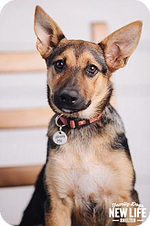 German Shepherd Dog Mix Puppy for adoption in Portland, Oregon - Penny