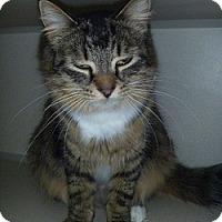 Adopt A Pet :: Jacqueline - Hamburg, NY