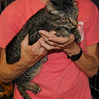 Adopt A Pet :: Barney - Parsons, KS