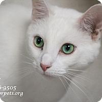 Adopt A Pet :: A Young Male: LELAND - Monrovia, CA