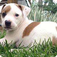 Adopt A Pet :: Damita - Boulder, CO