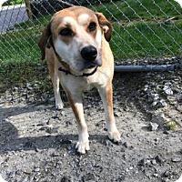 Adopt A Pet :: Magnolia - Cashiers, NC