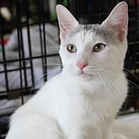 Adopt A Pet :: Isabella - Potomac, MD