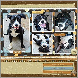 Pit Bull Terrier/Labrador Retriever Mix Dog for adoption in Loma Linda, California - Sasha