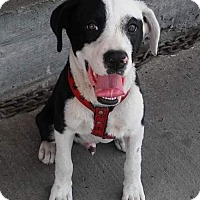 Adopt A Pet :: Captain Jack - Porter Ranch, CA