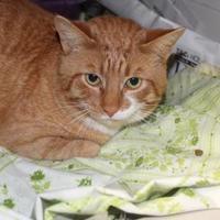 Adopt A Pet :: Bobby - Robinson, IL