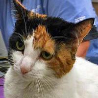 Adopt A Pet :: Binki - Noblesville, IN