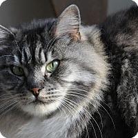 Adopt A Pet :: Arimis - Novato, CA