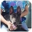 Photo 3 - Basenji Mix Dog for adoption in Long Beach, New York - Baby