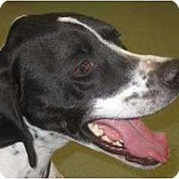 Adopt A Pet :: Lou - Columbus, OH