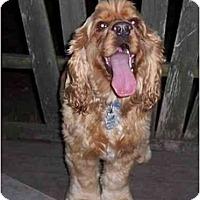 Adopt A Pet :: Teddy - Tacoma, WA