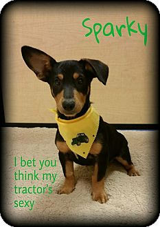 Dachshund Mix Dog for adoption in Walker, Louisiana - Sparky