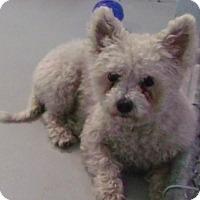 Adopt A Pet :: Addimay - Muskegon, MI