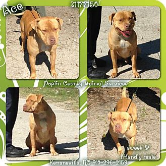 Bulldog/American Pit Bull Terrier Mix Dog for adoption in Kenansville, North Carolina - ACE