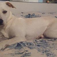 Adopt A Pet :: MEG - Beaumont, TX