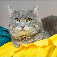 Adopt A Pet :: Tiger - Corinne, UT