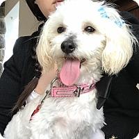 Adopt A Pet :: Chiquita - San Diego, CA