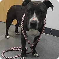 Adopt A Pet :: Temperance - Farmington, NM