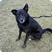 Adopt A Pet :: JR II - Joliet, IL