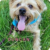 Adopt A Pet :: Duncan - Ventura, CA