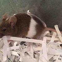 Adopt A Pet :: LUTHIEN - Urbana, IL