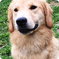 Adopt A Pet :: Kare - Pleasant Plain, OH