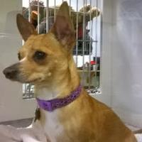 Adopt A Pet :: Prince - Rio Rancho, NM