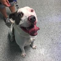 Adopt A Pet :: Prince - Greenville, PA
